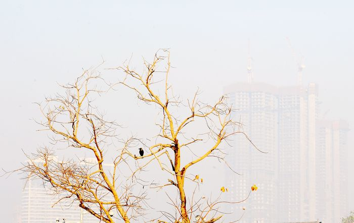 Mumbai Wakes Up, Calls For Deonar Shutdown, After Smoke From The Garbage Dump Chokes The City For 3 Days