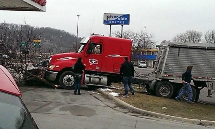 dog crashes truck