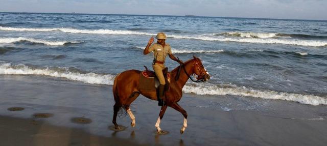 Horse on duty