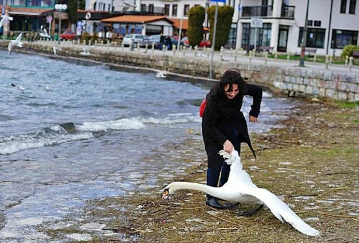 Female tourist kills swan