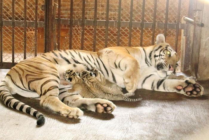 Surat zoo