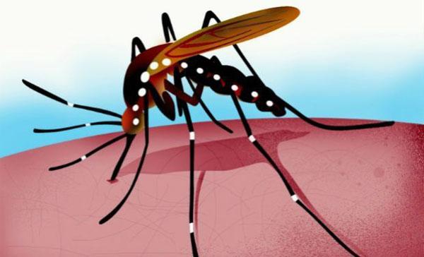 Botanical Drug Dengue