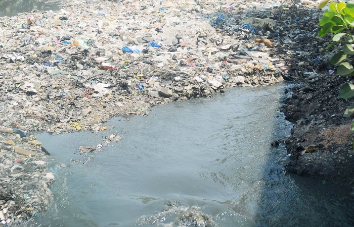 Deer Are Eating Plastic And Drinking Sewage At One Of Mumbai