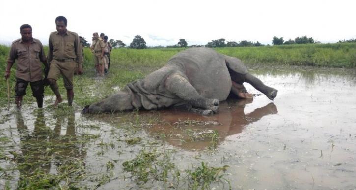 Poaching in Kaziranga