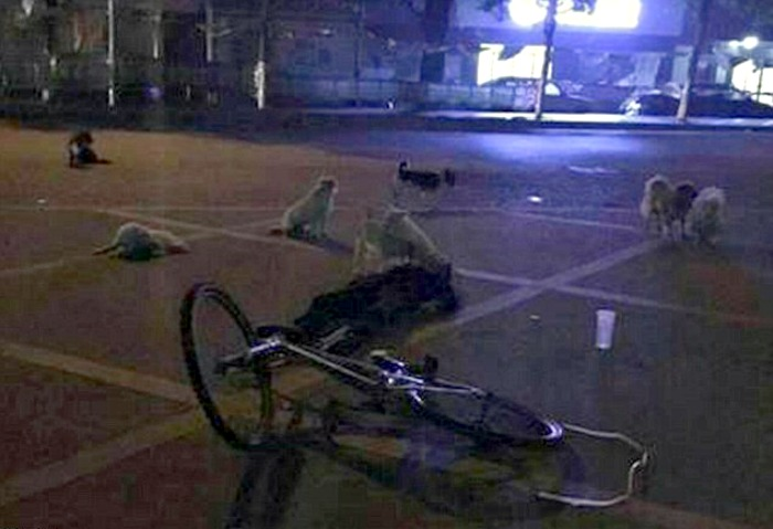 Dogs guard this biker