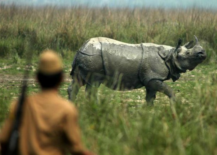 Whither Assam Rhinos? People want swift & decisive action against poaching from the new Government!