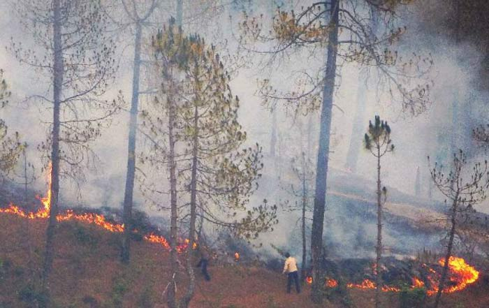 Uttrakhand Forest Fire Claims Five Lives Even As Government Steps Up Effort