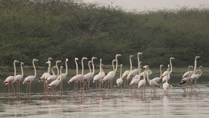 Soor Sarovar Bird Sanctuary fire