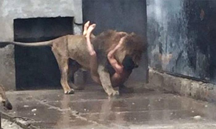 Chilean man jumps into lions den