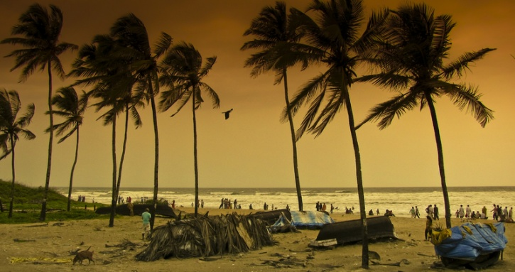 coconut tree india