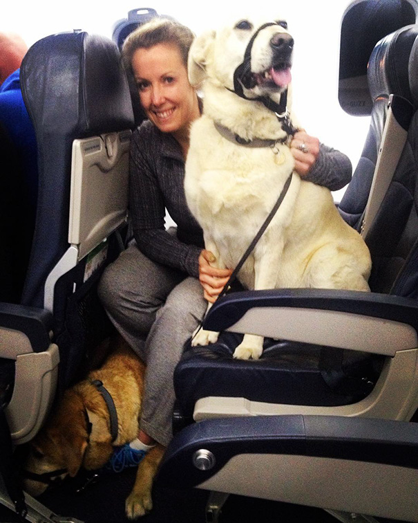 Canadian airlines rescue pets