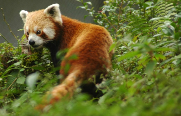 Community led conservation increases wildlife population in Nagaland
