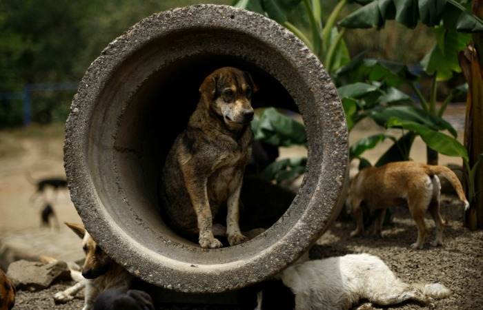 These Images From The Land Of Stray Dogs Will Keep You Smiling Through The Day