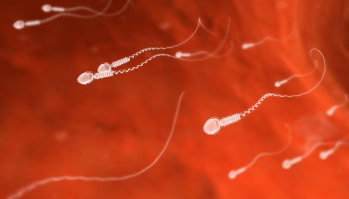 Scientists Transform Human Skin Cells Into Artificial Sperms!
