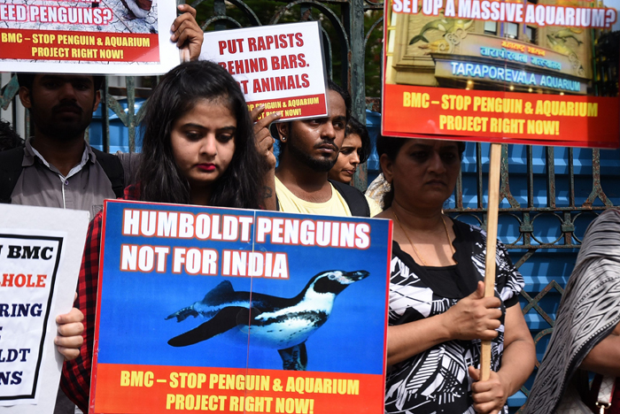 Byculla zoo, penguin