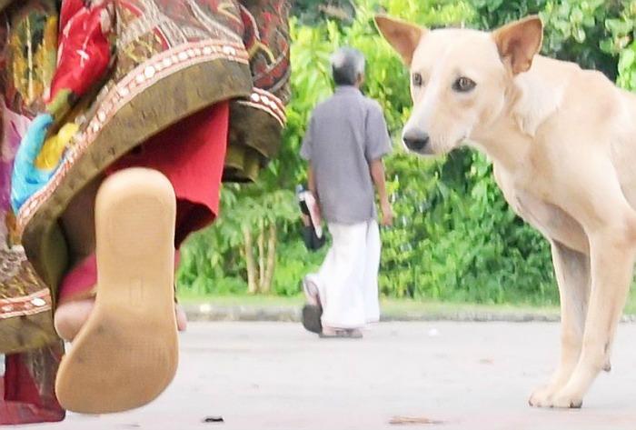 kerala stray dogs