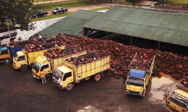 Palm oil child labour