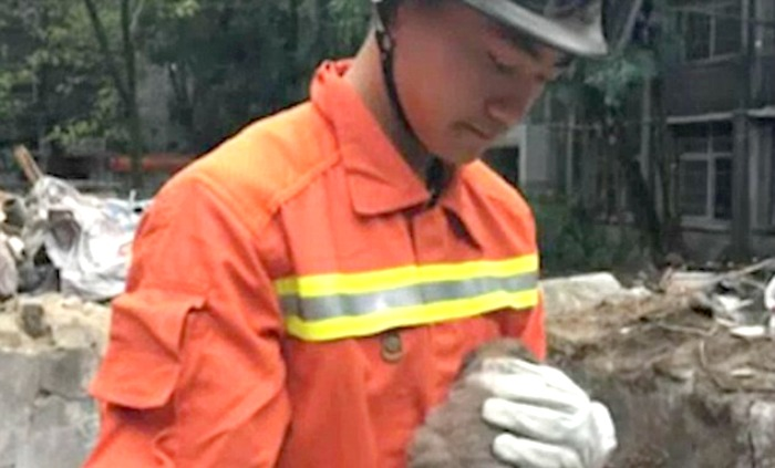 firefighters rescue dogs