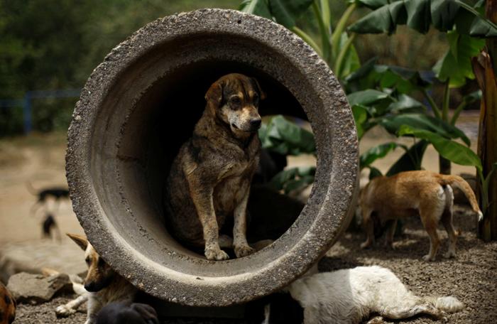 Dogs in Kerala