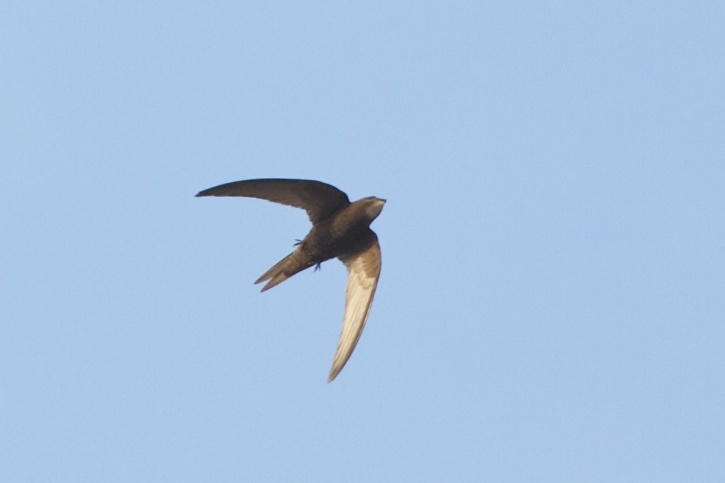 birdingbeijing