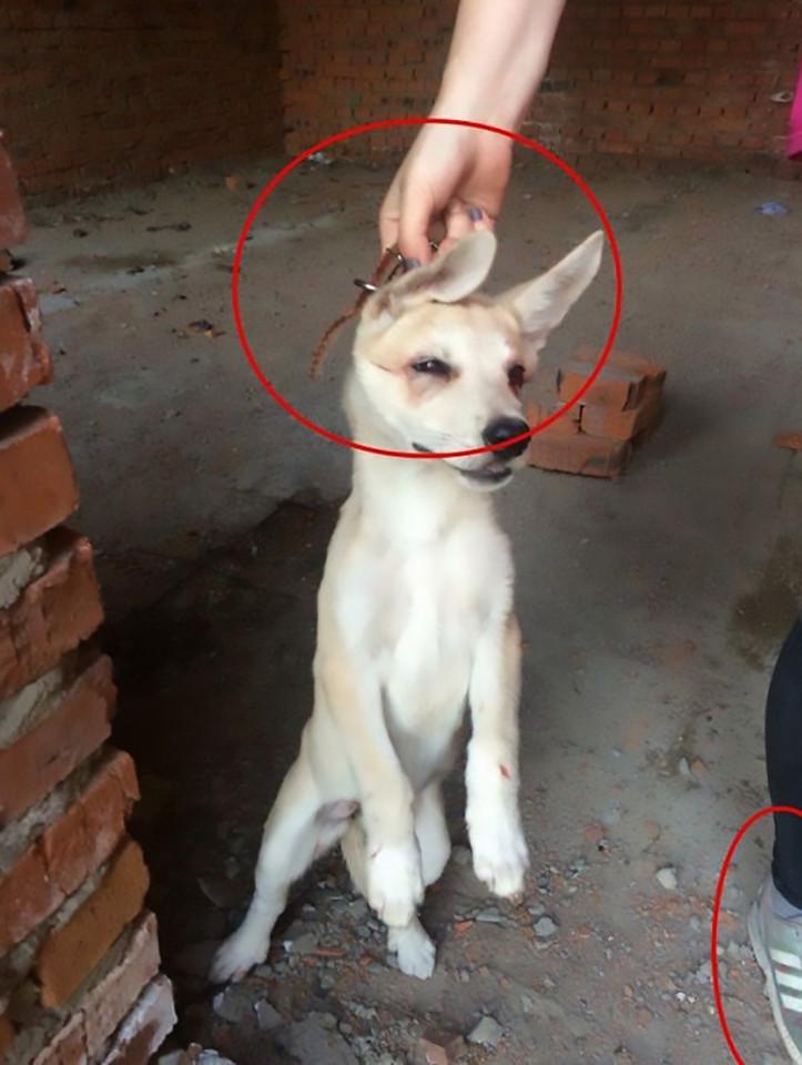 russian girls horror torturing animals 2