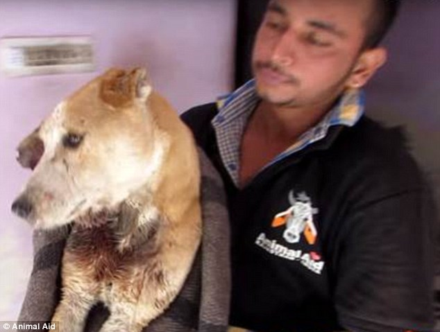 dylan dog animal aid