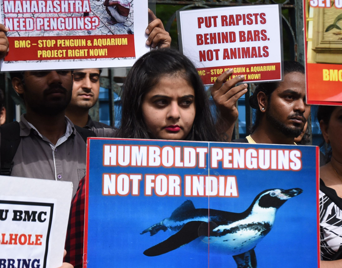 The Big Lie Behind The Penguins At The Byculla Zoo