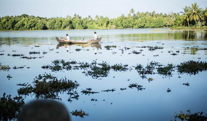 Tiny Kerala