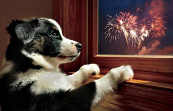 Pets Diwali