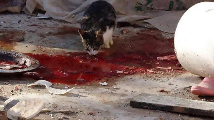 russian girls horror torturing animals 5