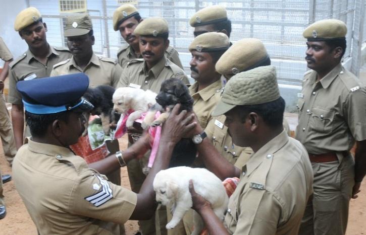 Chennai pups