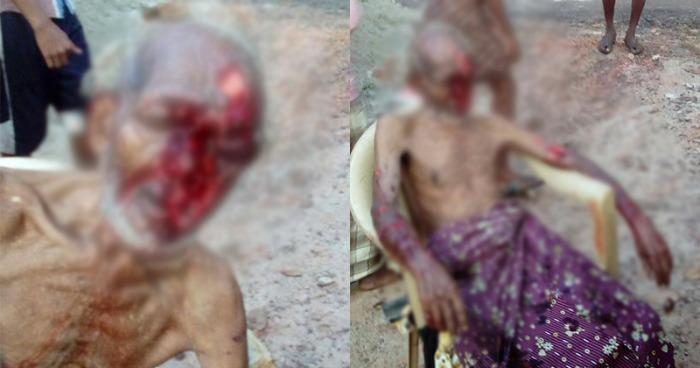 stray dog attacks in Kerala