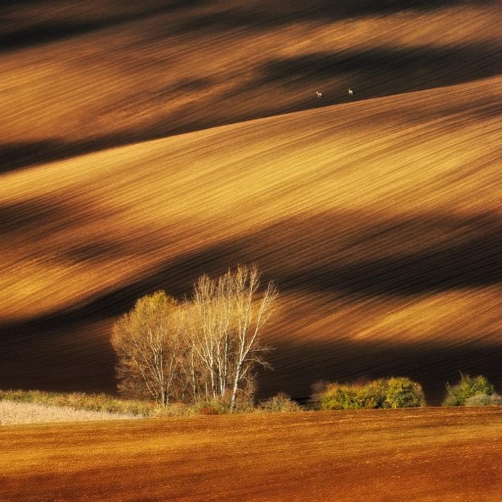 Moravian fields, Czech Republic