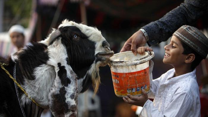 sacrifice of animals on Bakr-i-Eid