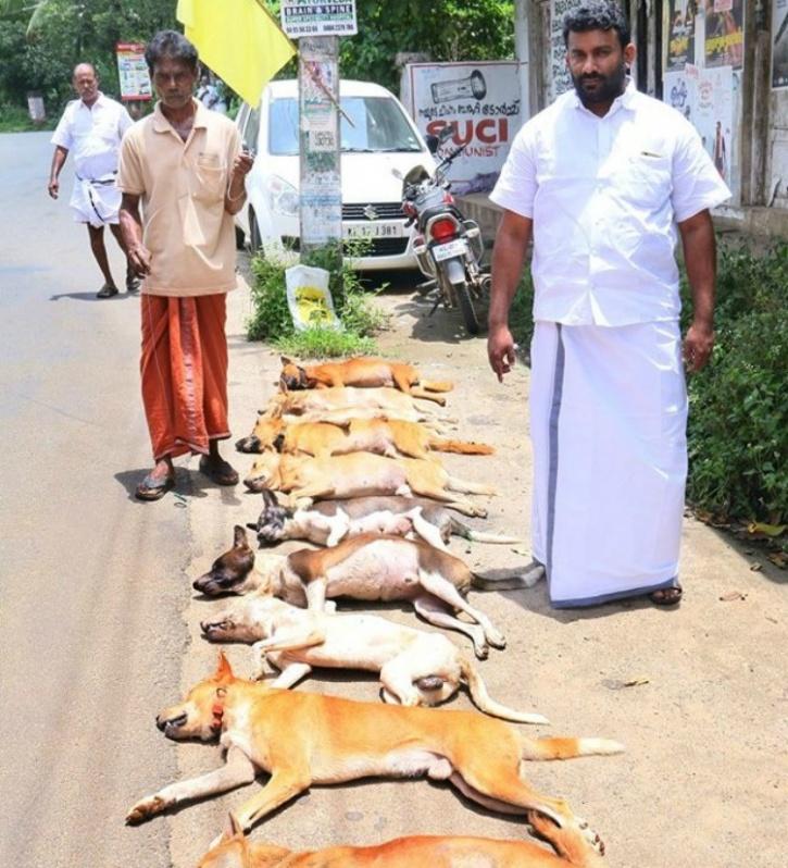 Kerala stray