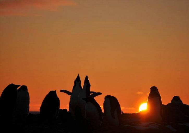 Adélies in Antartica