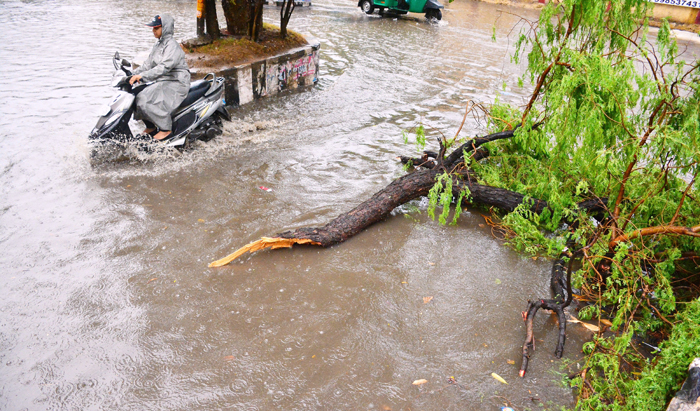 City Lost Nearly 400 Trees In 2 Months of Rain