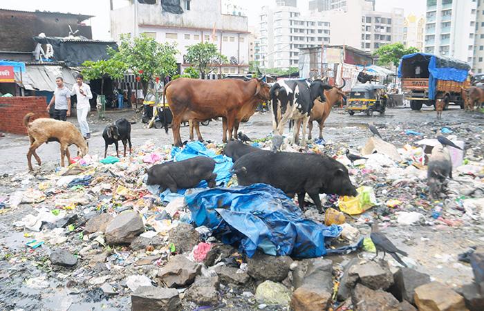 Wastage On Road
