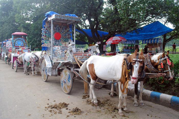 Kolkata's Buggy Rides
