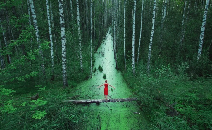 A forest in Russia