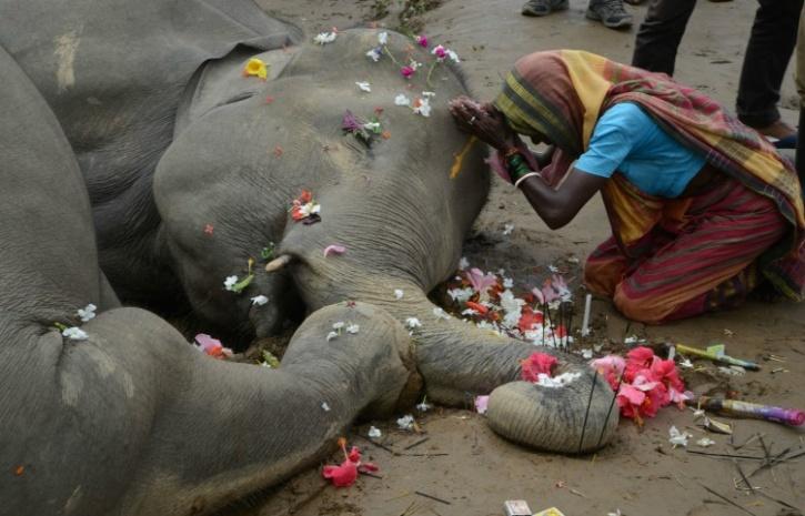 Siliguri elephant death