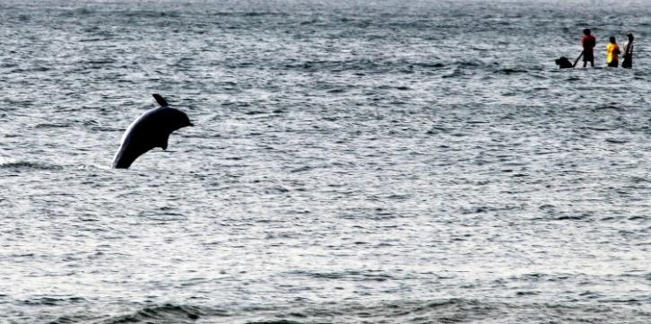 File photo of a dolphin at Marina Beach
