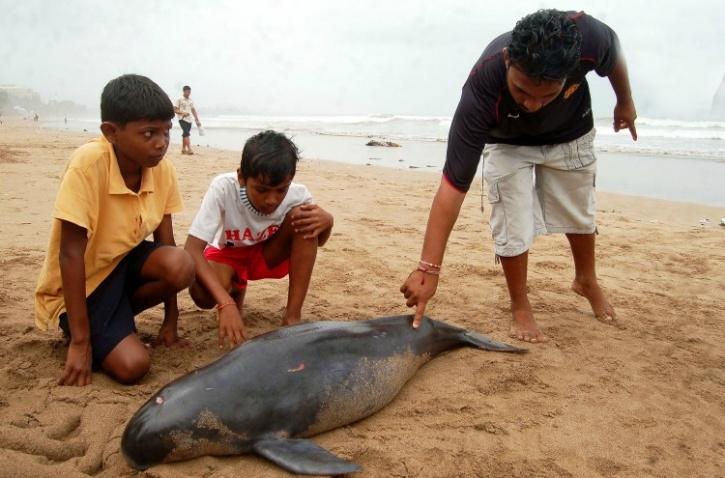 File photo of dead dolphin in Mumbai