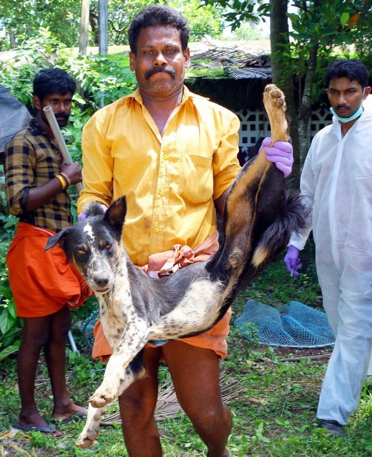 Kerala stray sterilisation