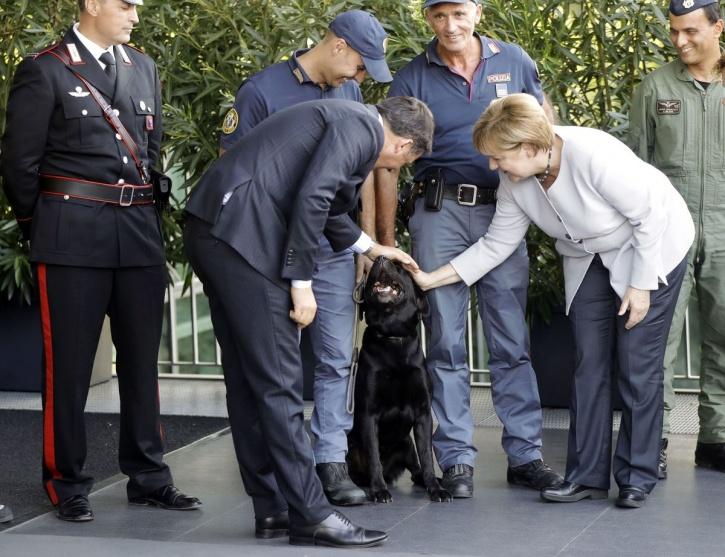Leo Earthquake Dog