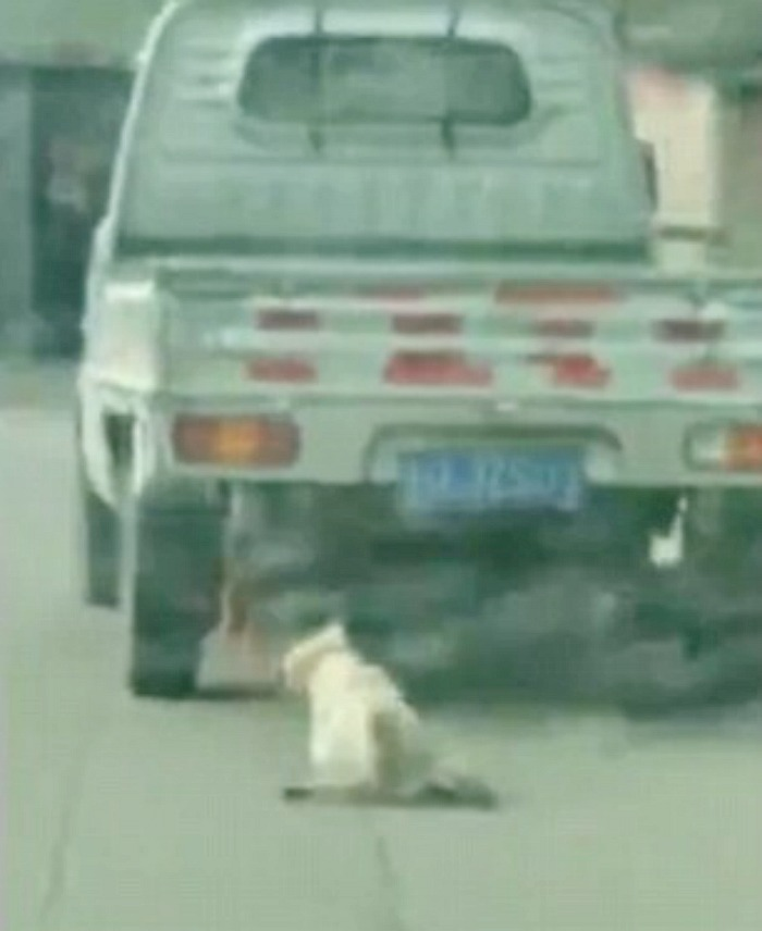 Dog dragged by a van in China