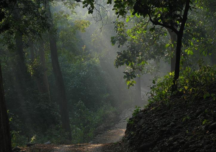 Jim Corbett National Park, Nainital District, Uttarakhand