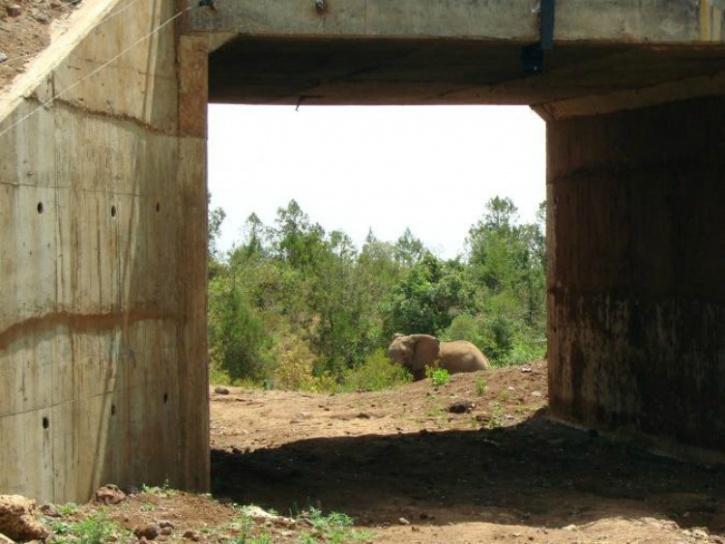 Elephant underpass