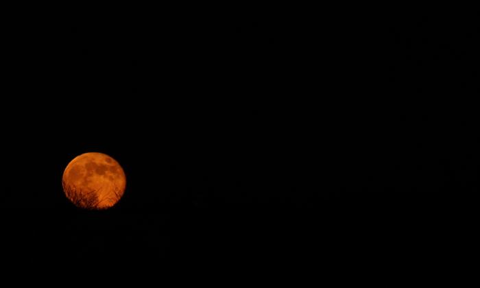 Harvest Moon Tonight