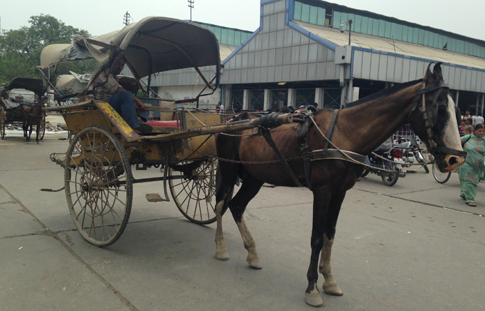 No Ambulance, So She Delivered Her Child In A Horse Cart Right Outside The Hospital